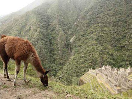4 daagse sportieve Inca Trail