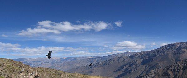 Colca Canyon 2 dagen