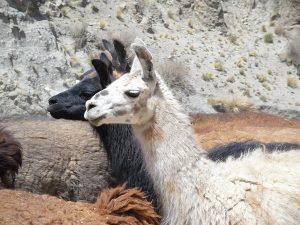 30 daagse Rondreis Peru